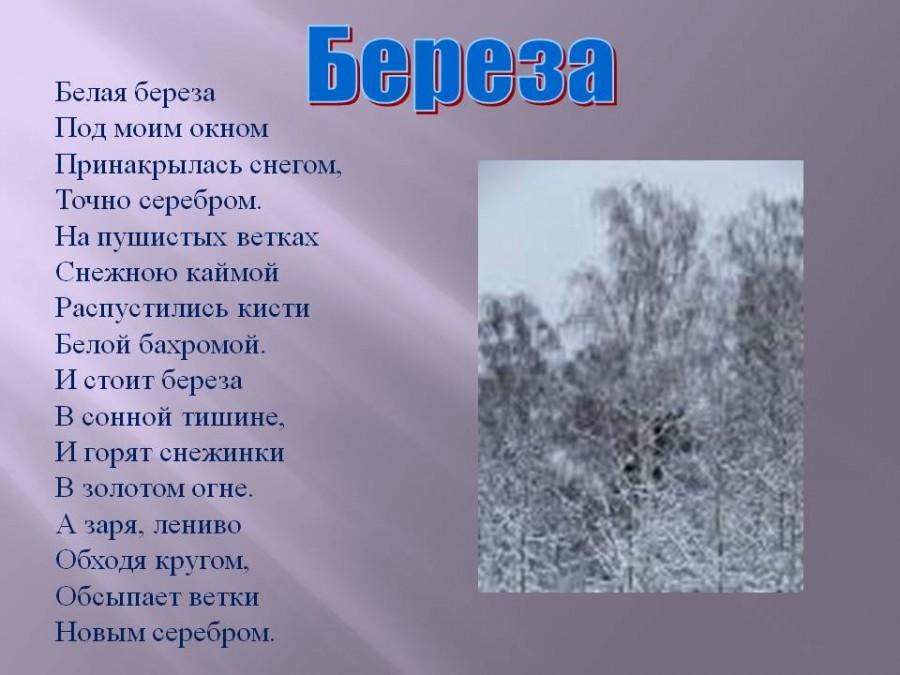 Есенин белая береза