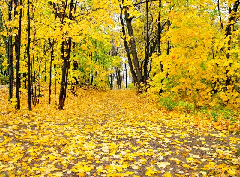 Стих лес русский лес